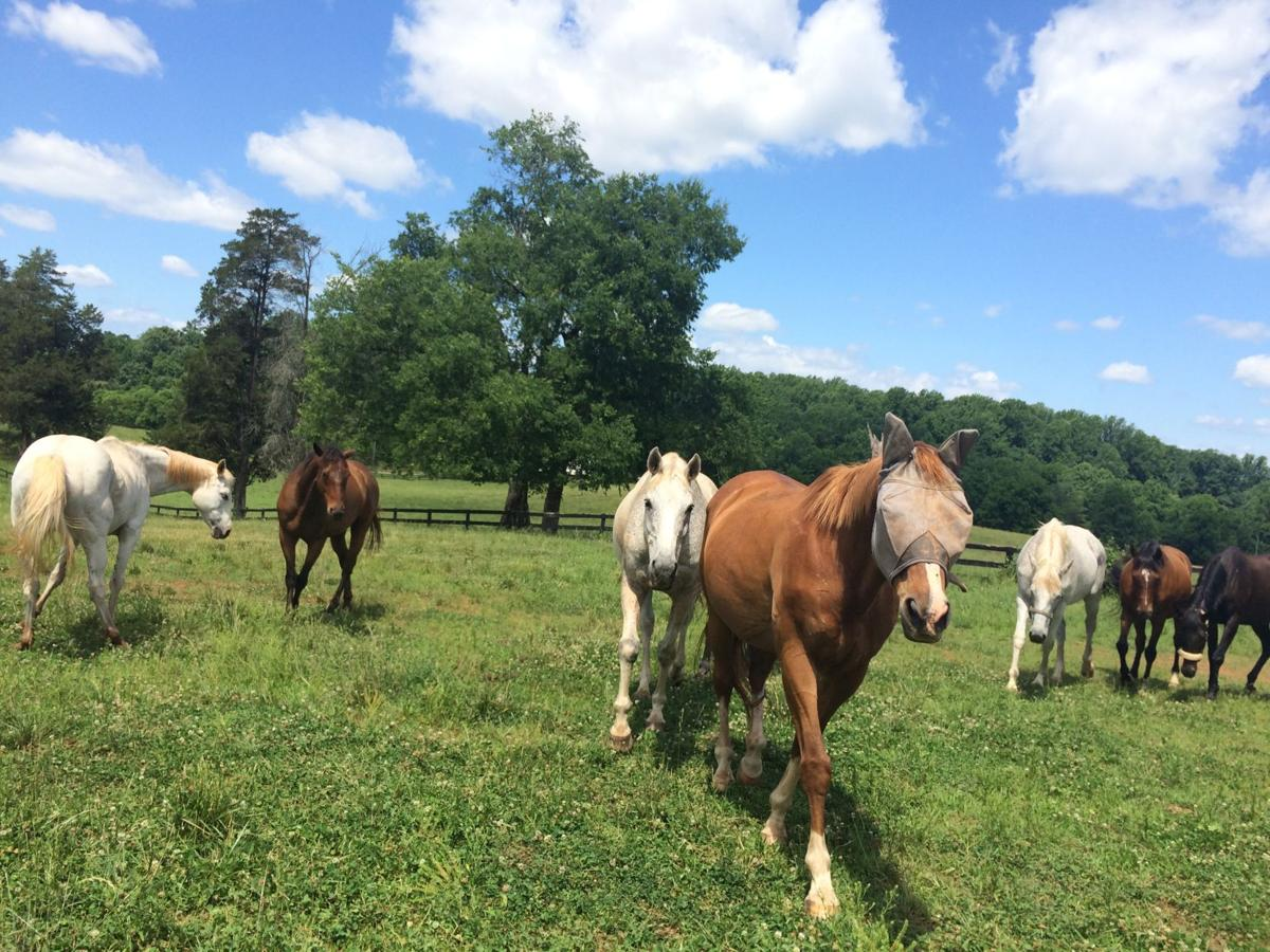 Retired Thoroughbreds at James Madison's Montpelier