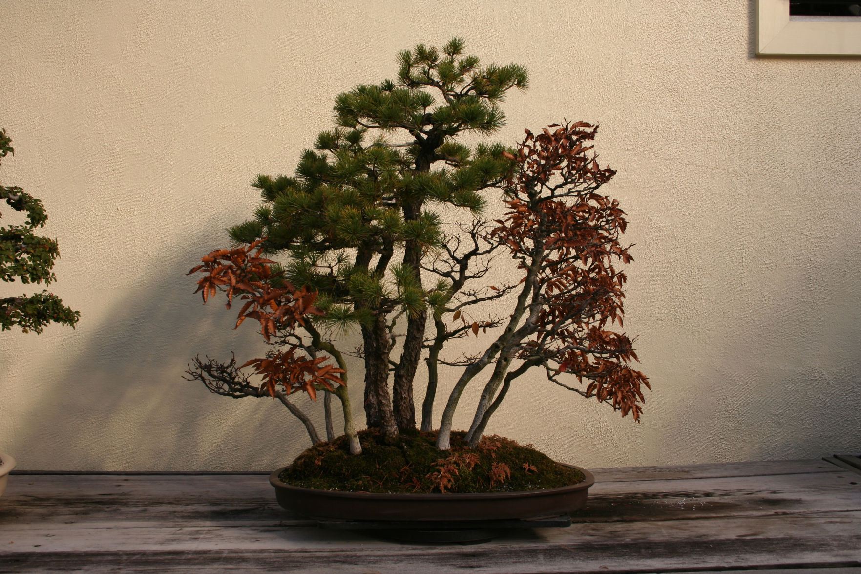 Bonsai Forest Garden