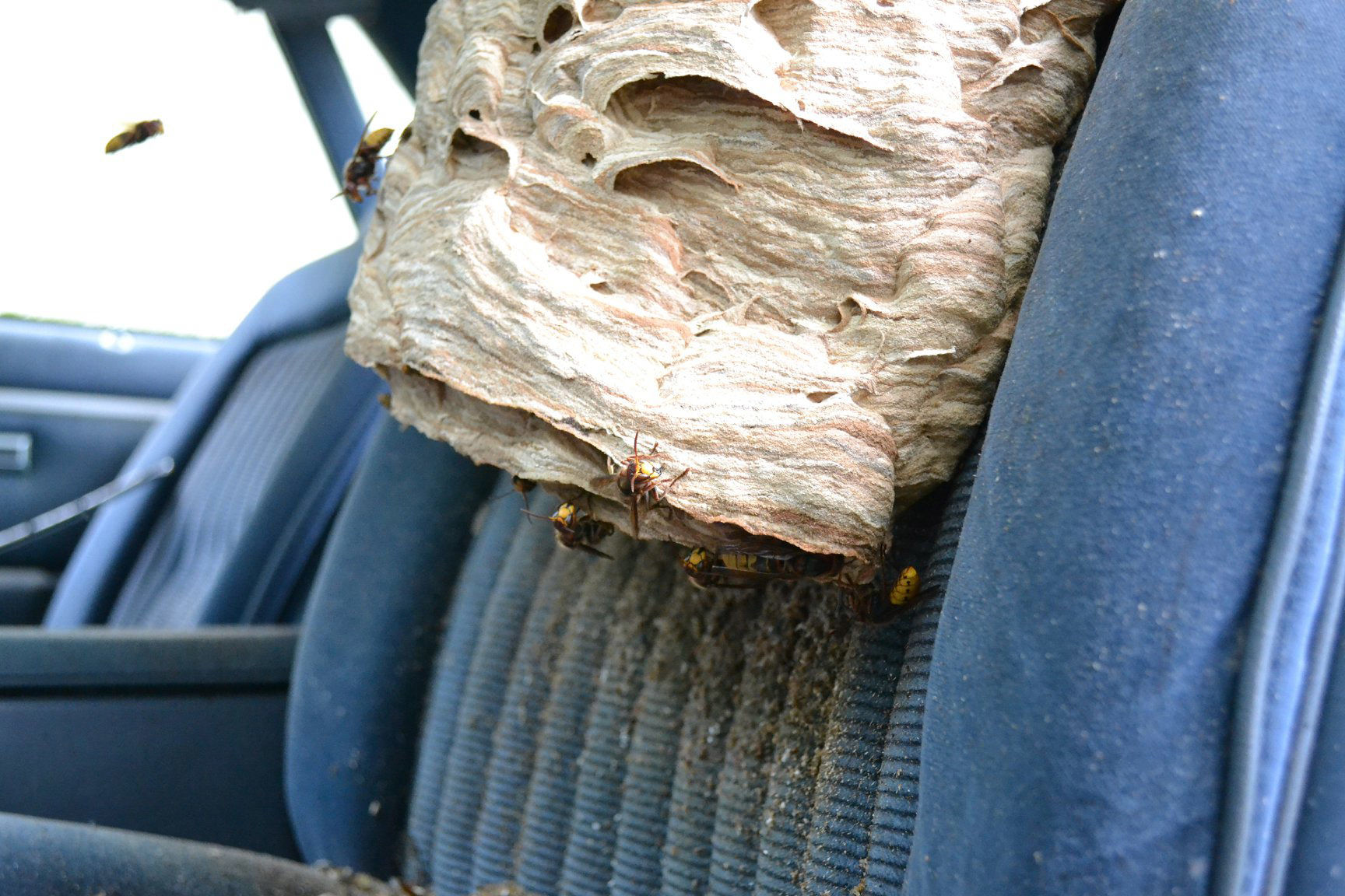 Ohio Bee Service Flushes Hundreds Of Hornets From Their