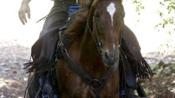 Trail riding leader makes picturesque vineyard and mountain