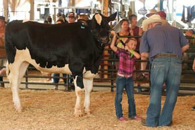 Fair livestock results