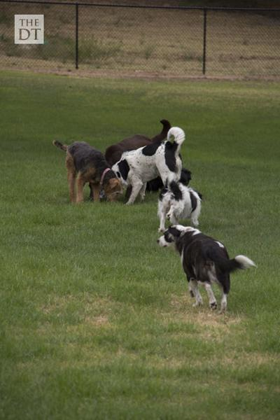 Canyon Run dog park officially opened