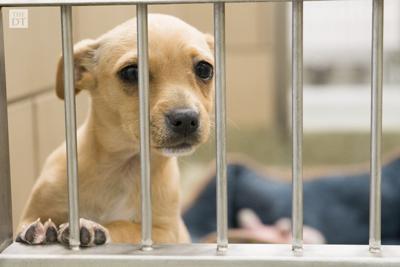 Lubbock Animal Shelter