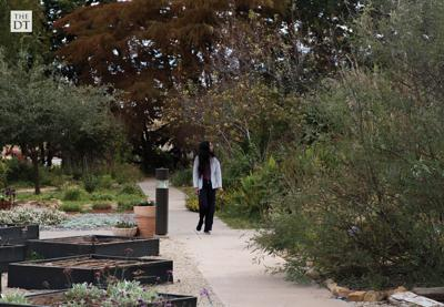 Horiculture Garden