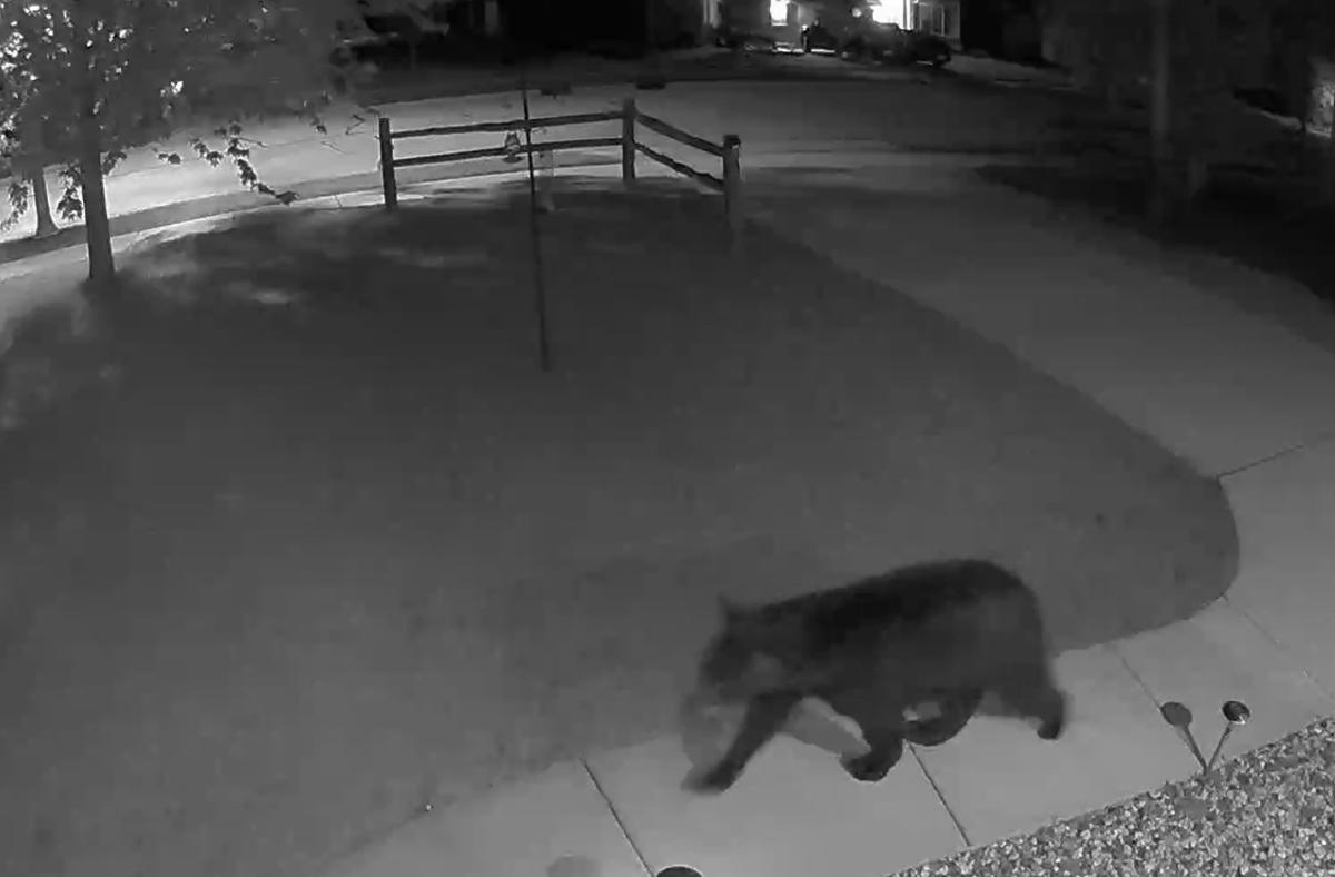 Black bear spotted on Johnson Creek's north side | News
