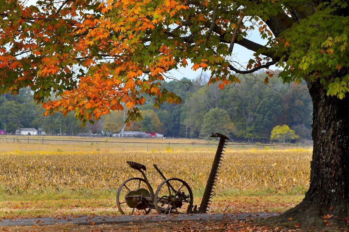 Living: Fall