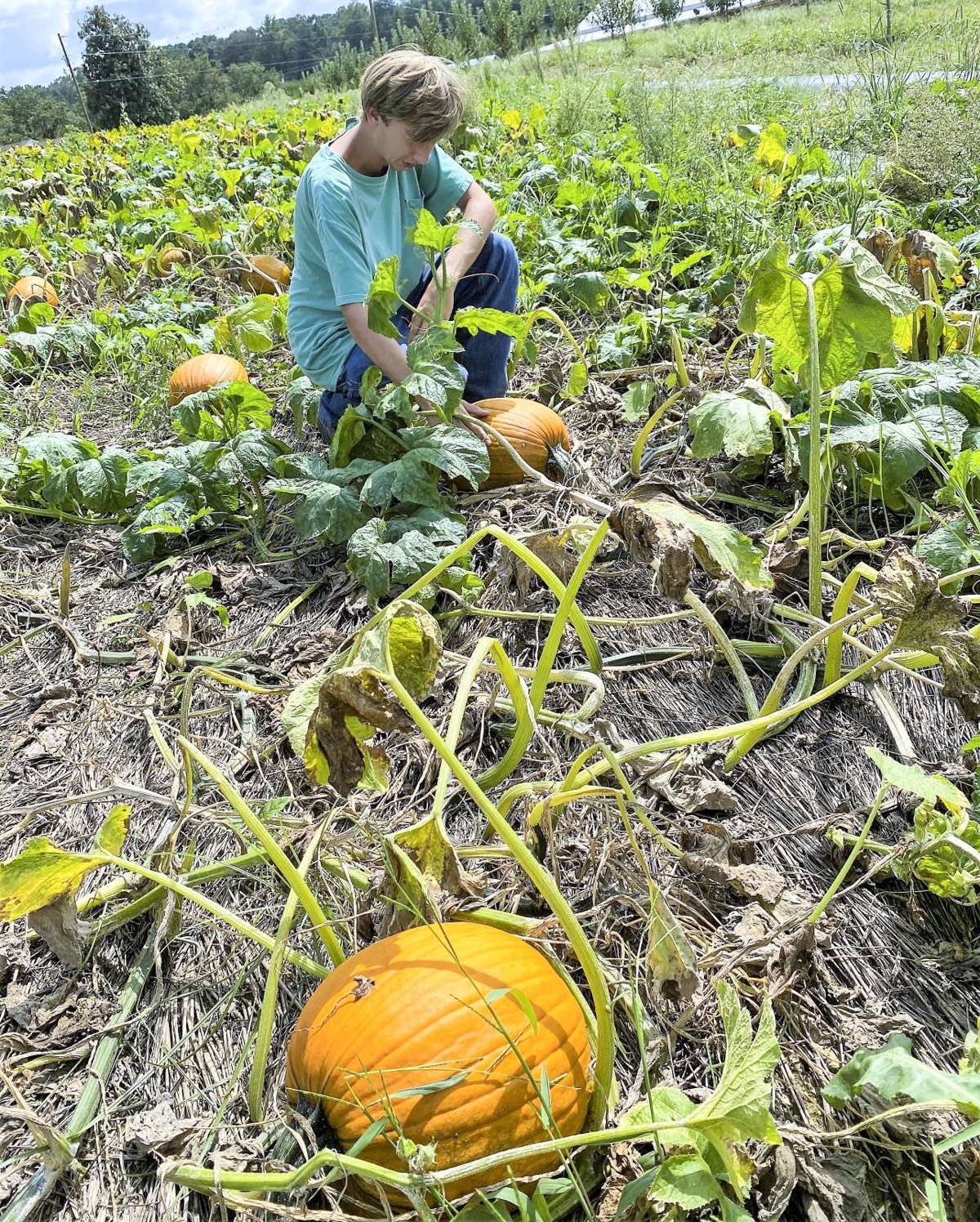 zac watts pumpkin
