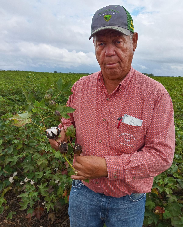 D211007 cotton crop