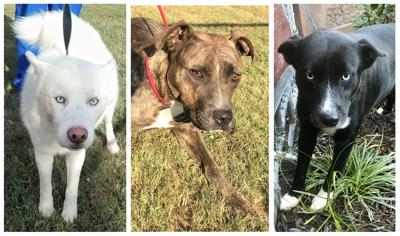D191020 pets of the week