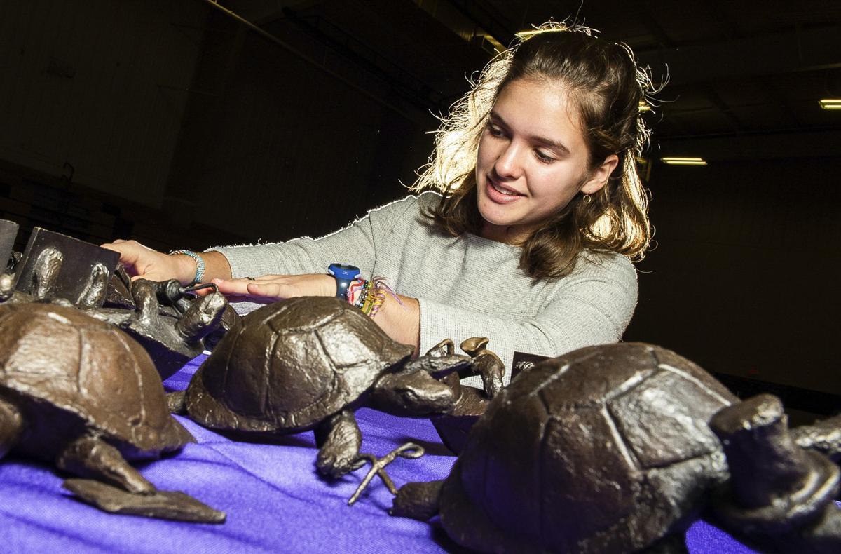 D191107 turtles