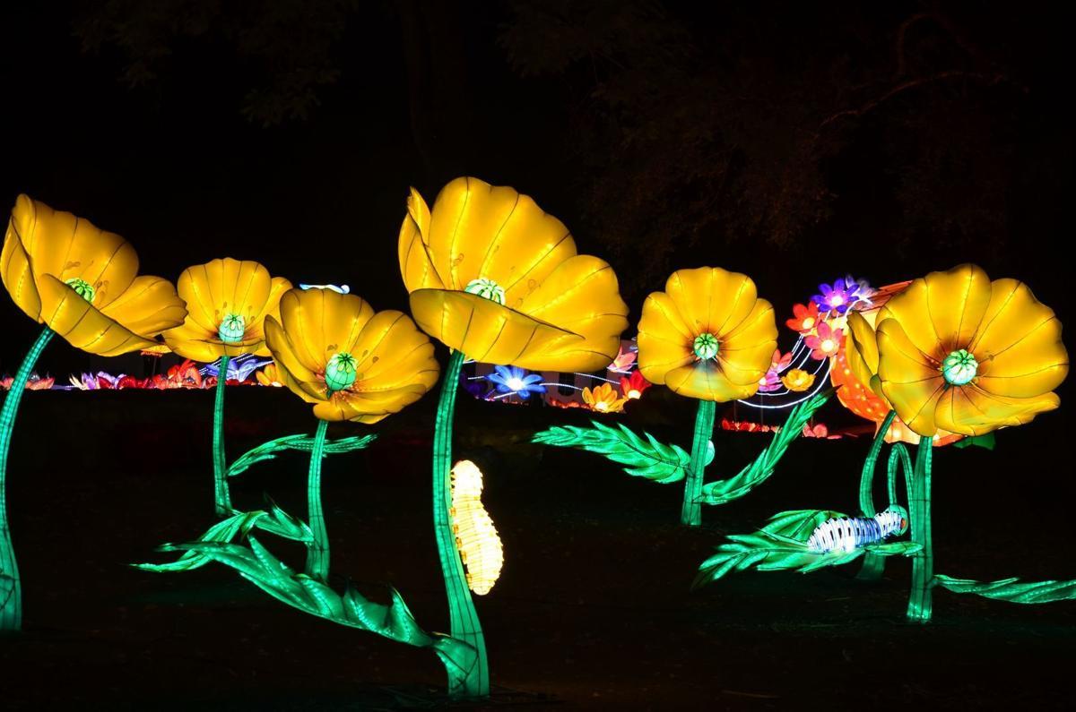 Things: Night Blooms
