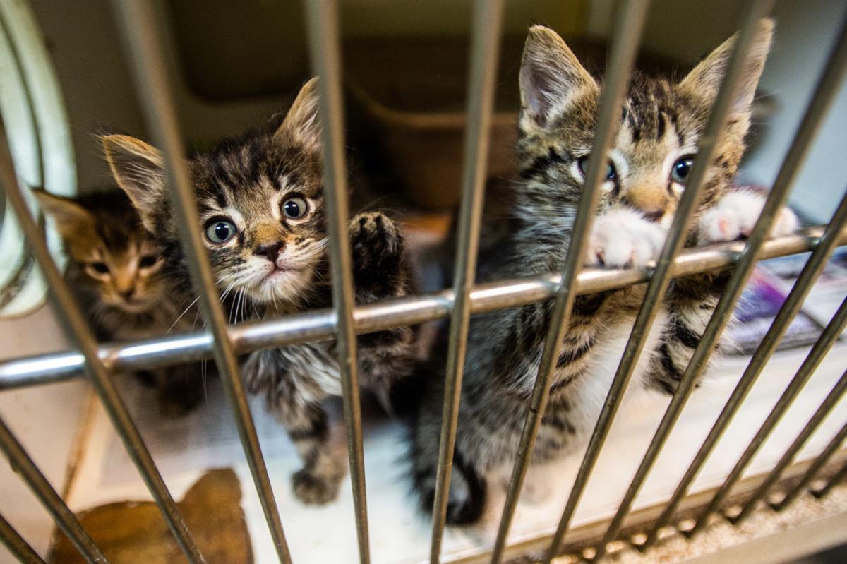D190811 morgan animal shelter