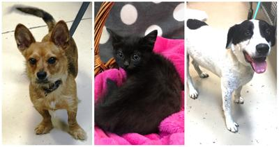 D190714 pets of the week