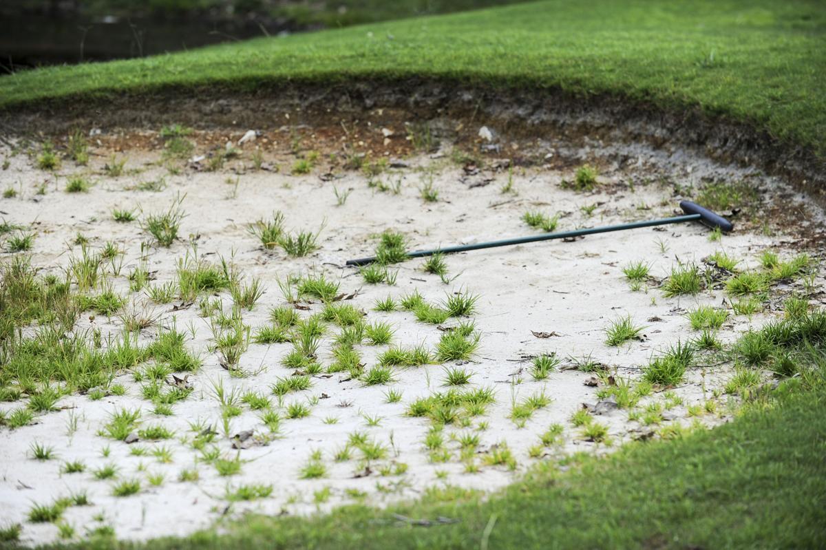 D170804 courtland golf