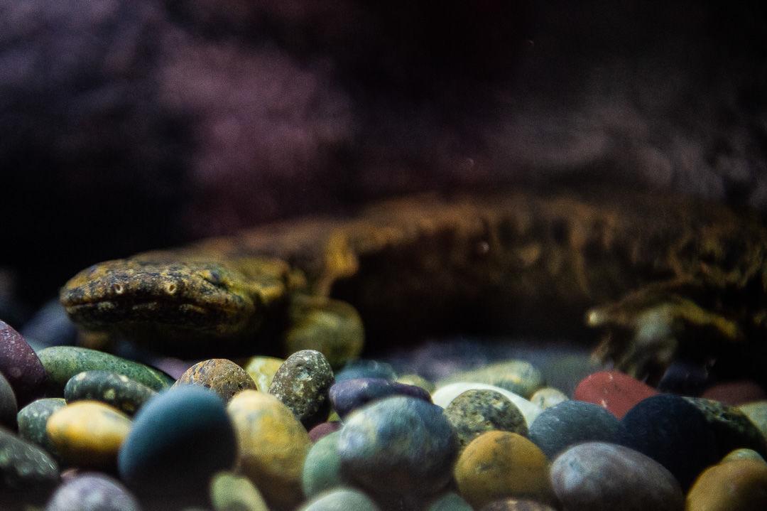 Things: Amphibian