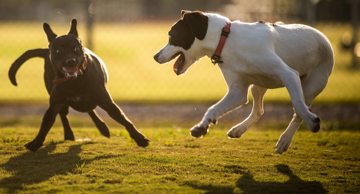 D190814 dog park update
