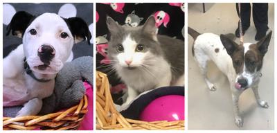 D190609 pets of the week