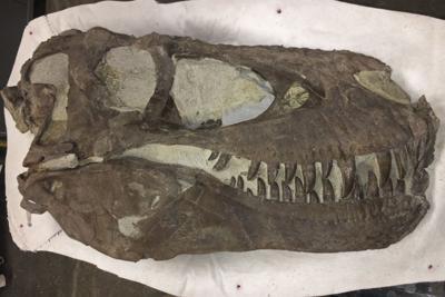 Tyrannosaurs-Social Predators