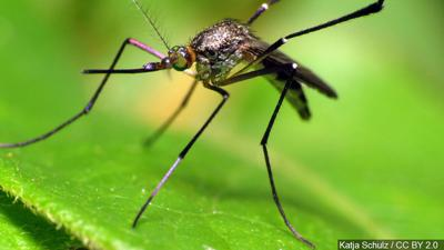 Two New Human Cases of West Nile in Mississippi