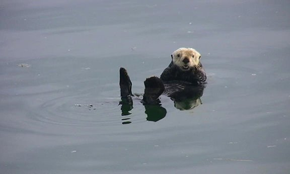 Sea otter by Riley Woodford