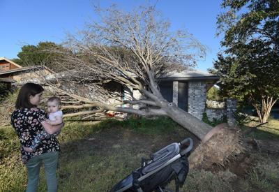Tree felled