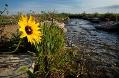 Ray Sasser: Bill would redirect $1.3 billion to wildlife conservation