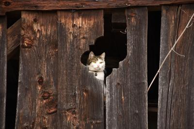 Lapsed Weathered Hiding Place Wooden Wall Cat Barn