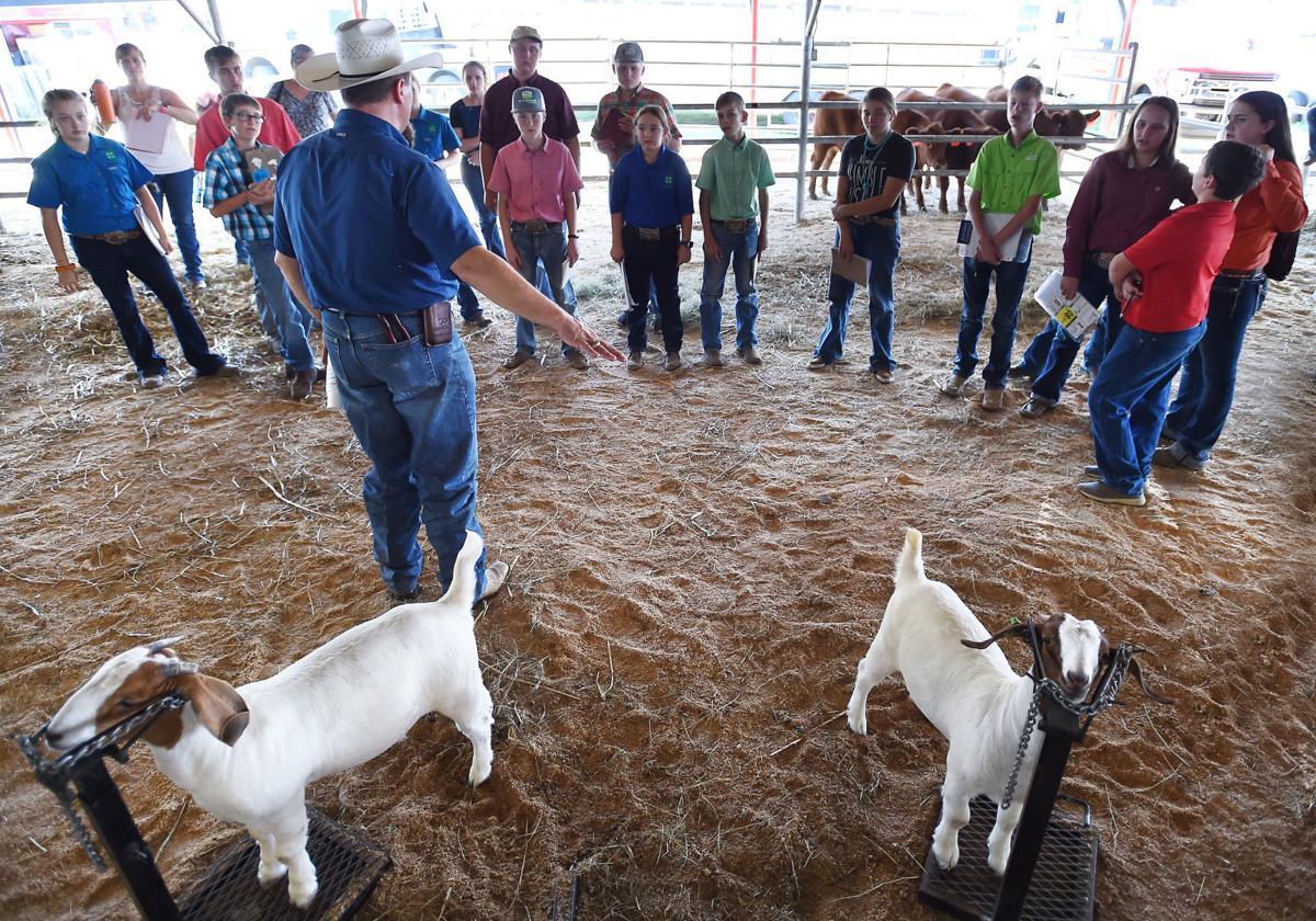 DRC_LivestockJudging2.jpg
