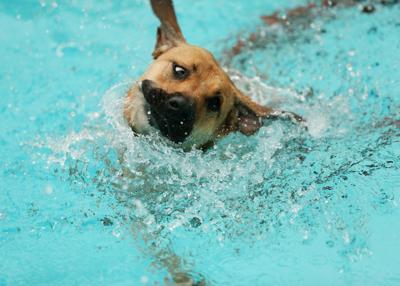 Doggie Bash