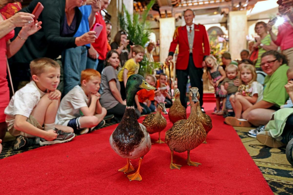 Peabody Hotel with its famous ducks coming to Roanoke