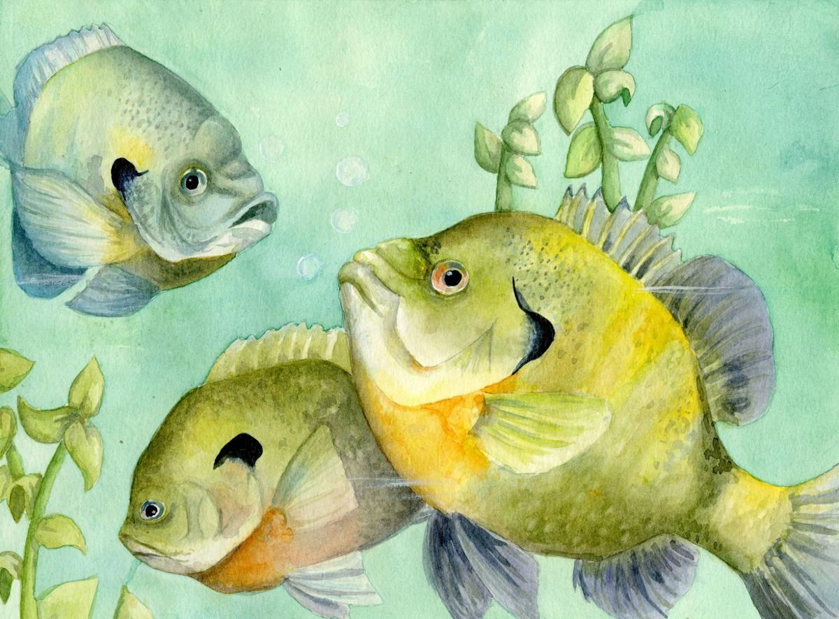 Texas State Fish Art Contest