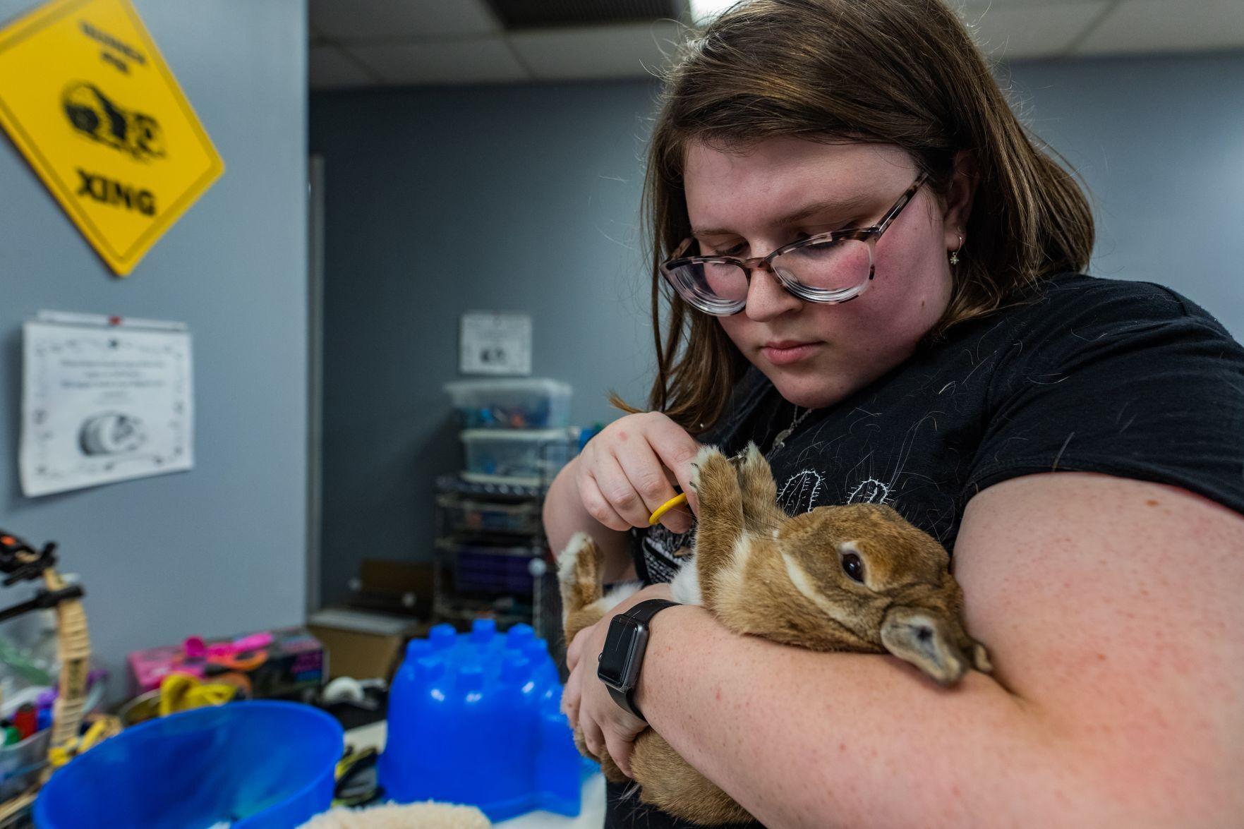 Katie Love rabbit