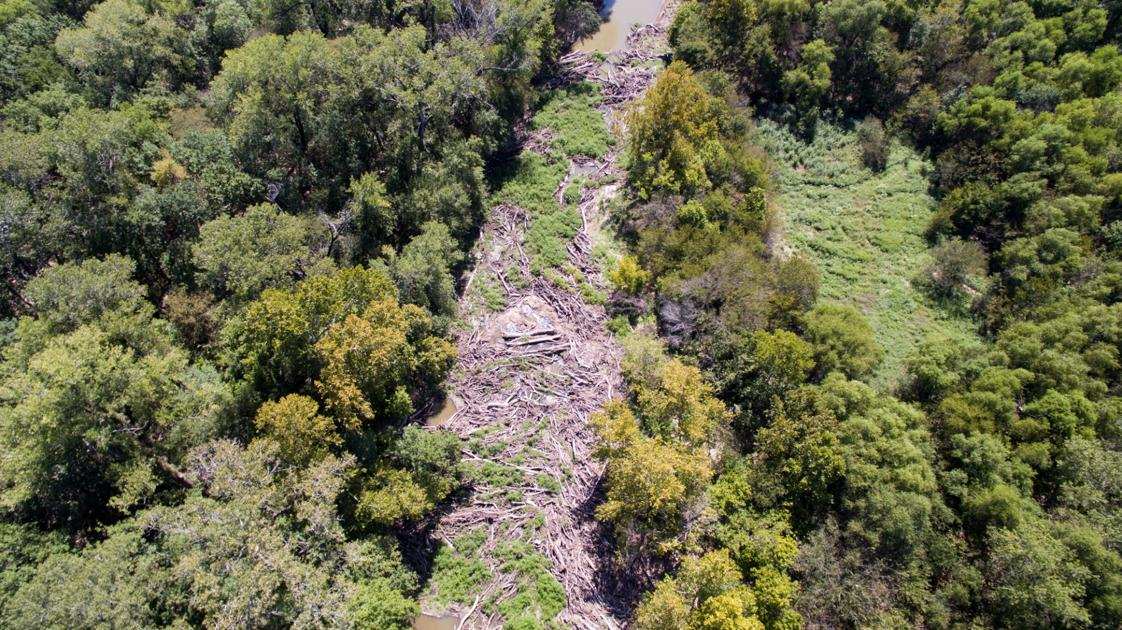 Massive log jam collecting in the Elm Fork of the Trinity River - Denton Record Chronicle