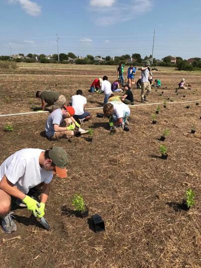UNT's Pollinative Prairie has become reality