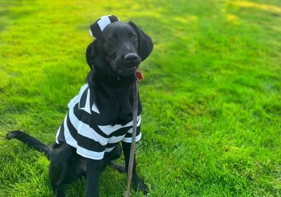 dog training prison