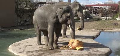 elephant denver zoo