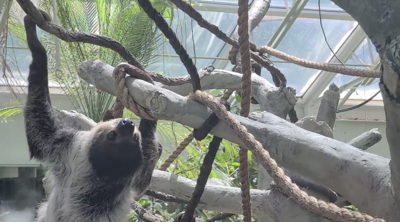 Sloth @ Denver Zoo
