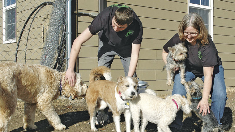 New dog training, boarding business opens
