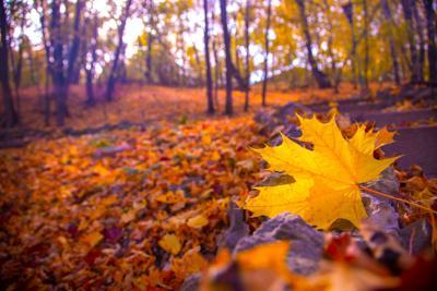 Fall autumn stock generic