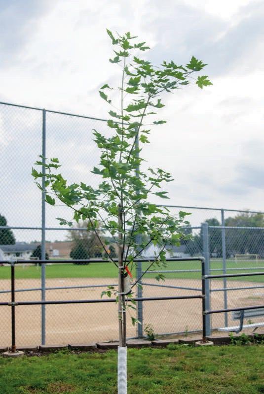 'We won't forget EMTs' - tree