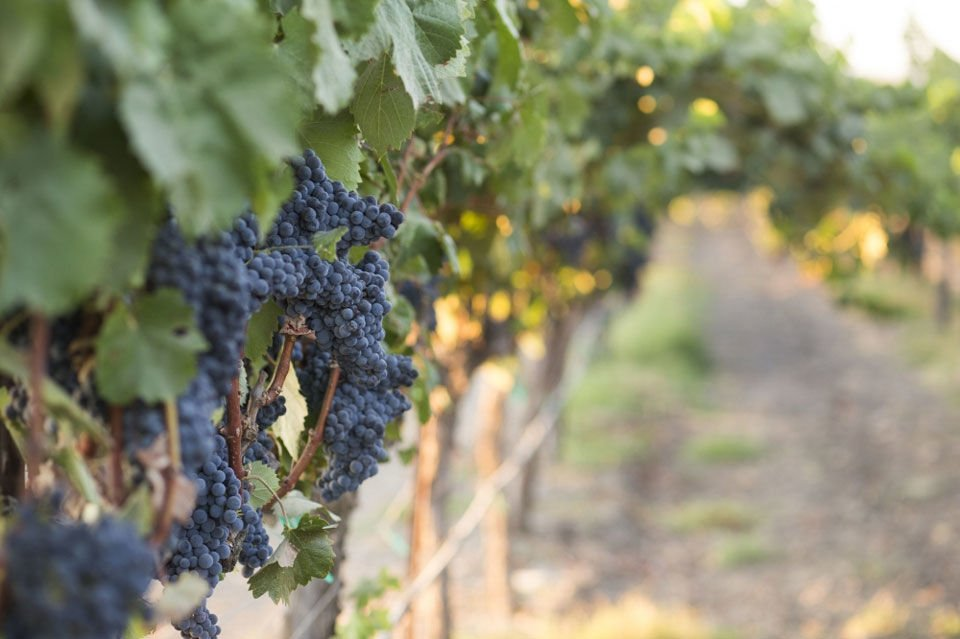 Livermore-Wine-Country-_-Meridith-Robertson1.jpg