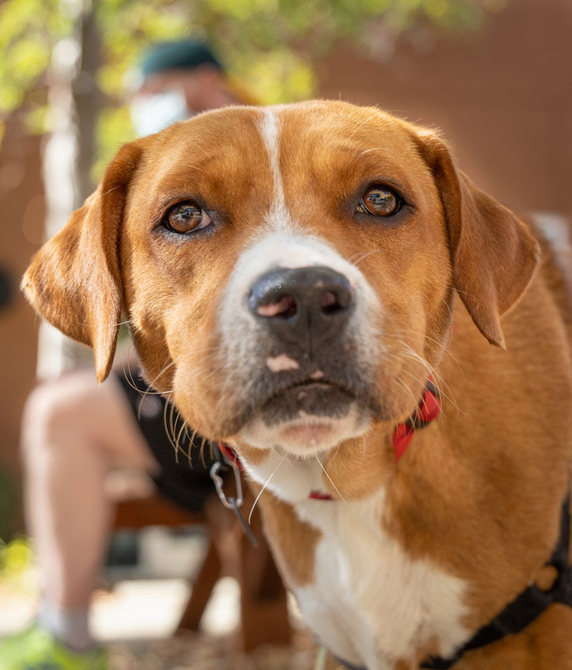 Courtesy-of-Tony-La-Russa's-Animal-Rescue-Foundation
