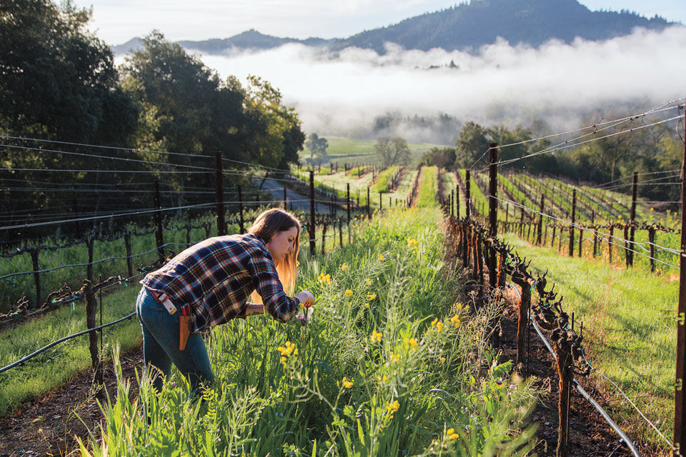 One Fine Weekend in Sonoma County
