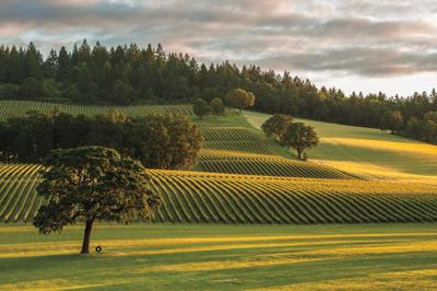 The Other Wine Country: Willamette Valley