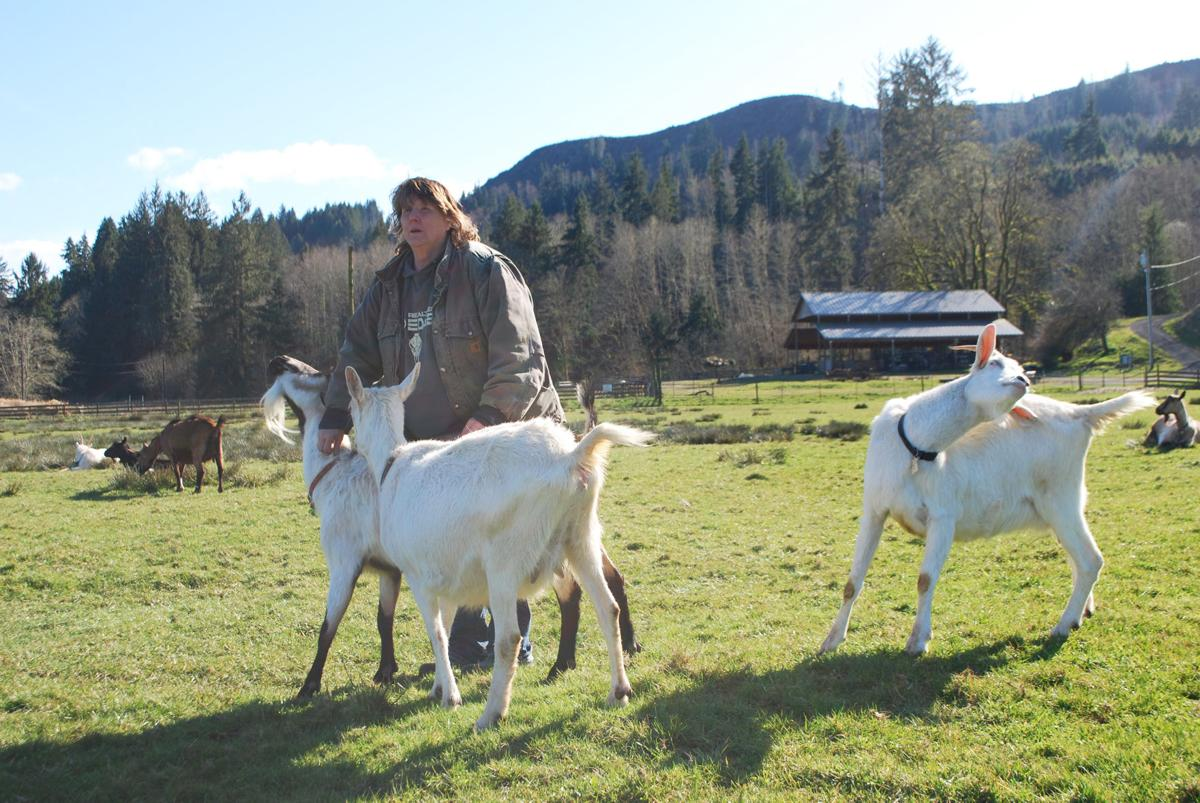 Allenback and goats