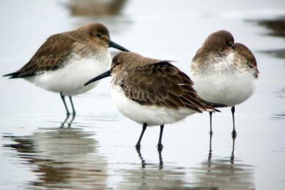 Birding at Fort Stevens
