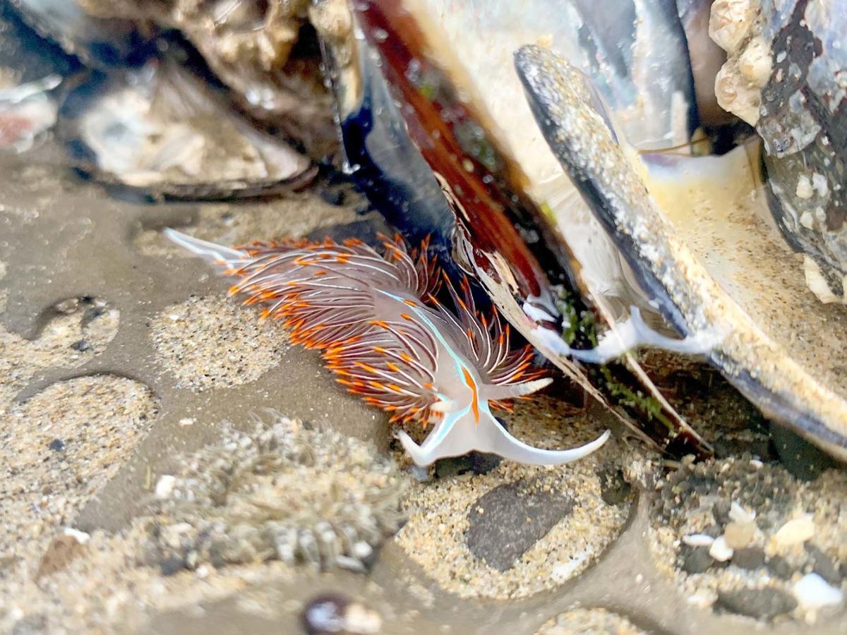 Take a nudibranch safari at Haystack Rock