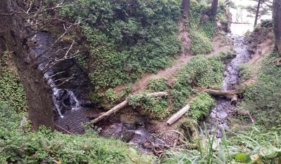 Oswald West Part 1: Cape Falcon Trail