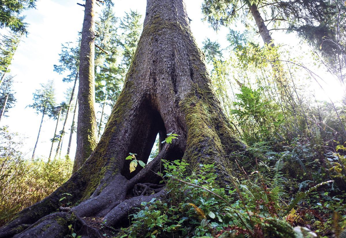 Take to the trees 2