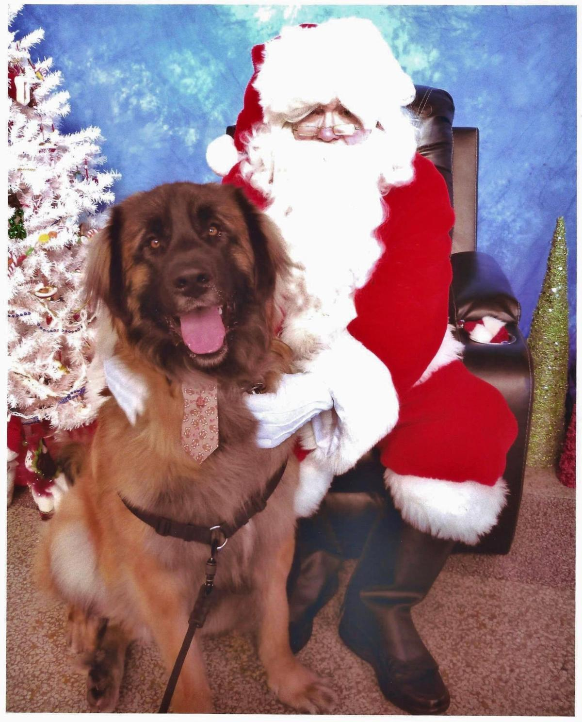 Pet project: Clatsop Animal Assistance Annual Holiday Party and Fundraiser Help homeless cats and dogs with treats, raffle, auction and pics with Santa